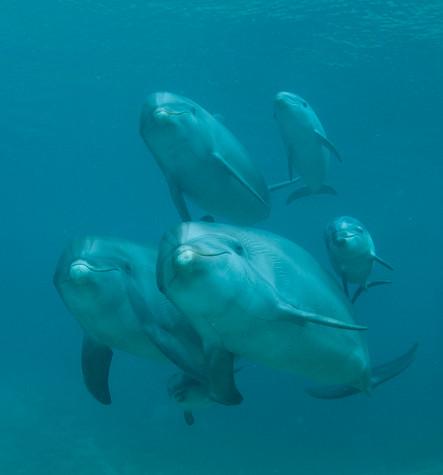 BAR-2581_baby-dolphins.JPG