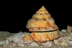 BAR-3736_slit-shell