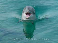BAR-2570_baby-dolphin.JPG