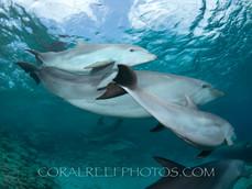 BAR-2585_baby-dolphins.JPG