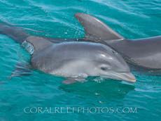 BAR-2559_baby-dolphin.JPG