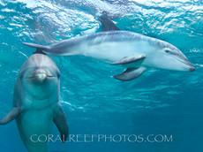 BAR-2595_baby-dolphin.JPG