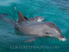 BAR-2554_baby-dolphin.JPG