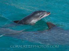 BAR-2555_baby-dolphin.JPG