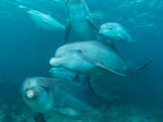 BAR-2573_baby-dolphins.JPG