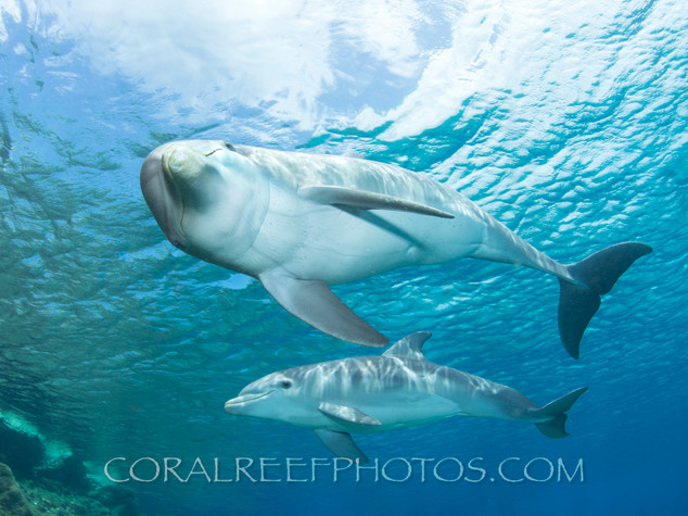 BAR-2568_baby-dolphin.JPG