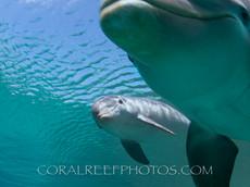 BAR-2576_baby-dolphin.JPG