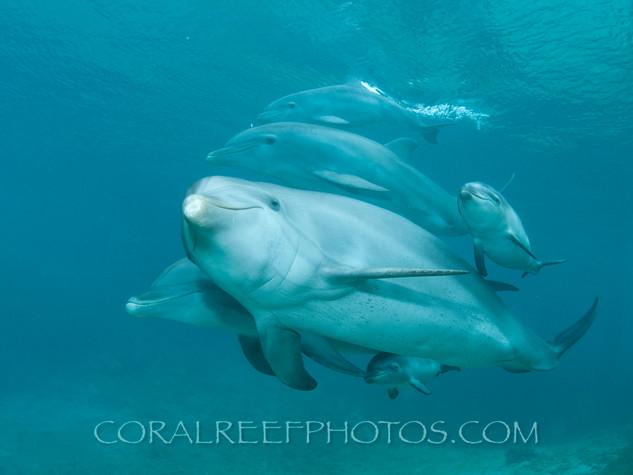 BAR-2580_baby-dolphins.JPG