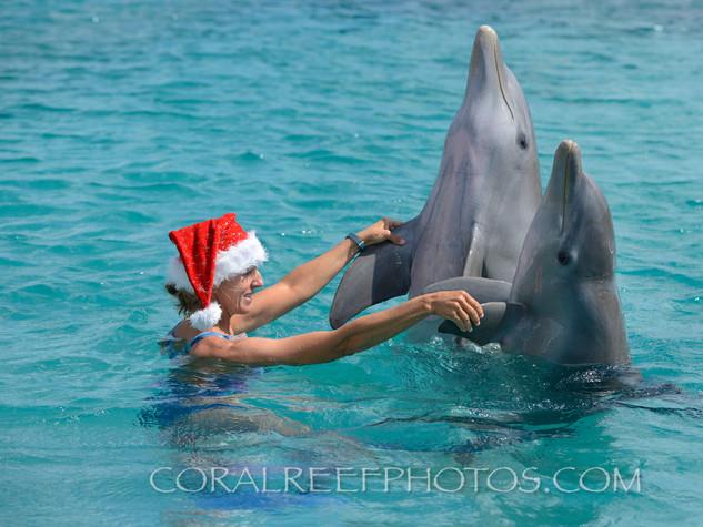 BAR-2590_Christmas-dolphin.JPG