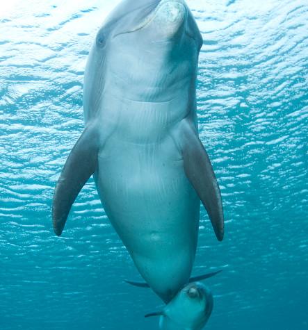 BAR-2596_baby-dolphin.JPG