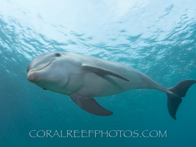 BAR-2594_baby-dolphin.JPG