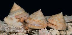 BAR-3690_slit-shells