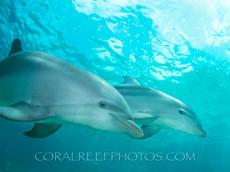 BAR-2572_baby-dolphin.JPG