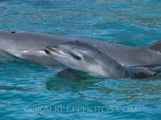 BAR-2557_baby-dolphin.JPG