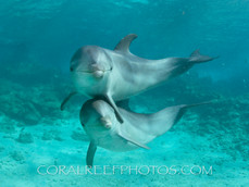 BAR-2599_baby-dolphins.JPG