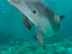 BAR-2601_baby-dolphins.JPG