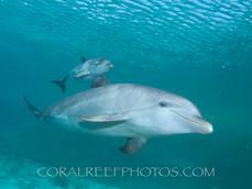 BAR-2587_baby-dolphin.JPG