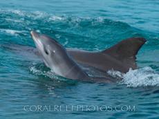 BAR-2556_baby-dolphin.JPG