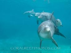 BAR-2583_baby-dolphins.JPG