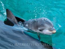 BAR-2551_baby-dolphin.JPG