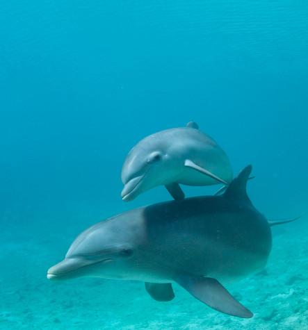 BAR-2578_baby-dolphin.JPG