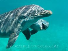 BAR-2548_baby-dolphin.JPG