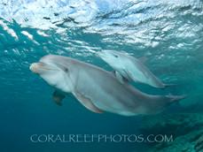 BAR-2593_baby-dolphin.JPG