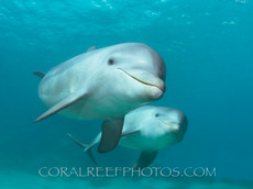 BAR-2600_baby-dolphins.JPG