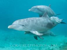 BAR-2582_baby-dolphins.JPG