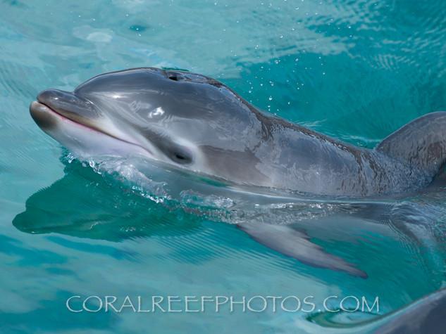 BAR-2560_baby-dolphin.JPG