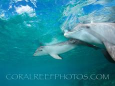 BAR-2589_baby-dolphin.JPG