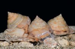 BAR-3692_slit-shells