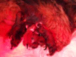 thumbnail_P3191396.jpg