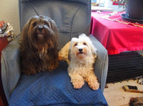 Loesje en Kiss op hun favoriete stoel