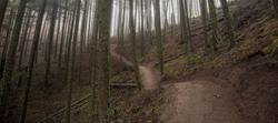 wood-trail.png