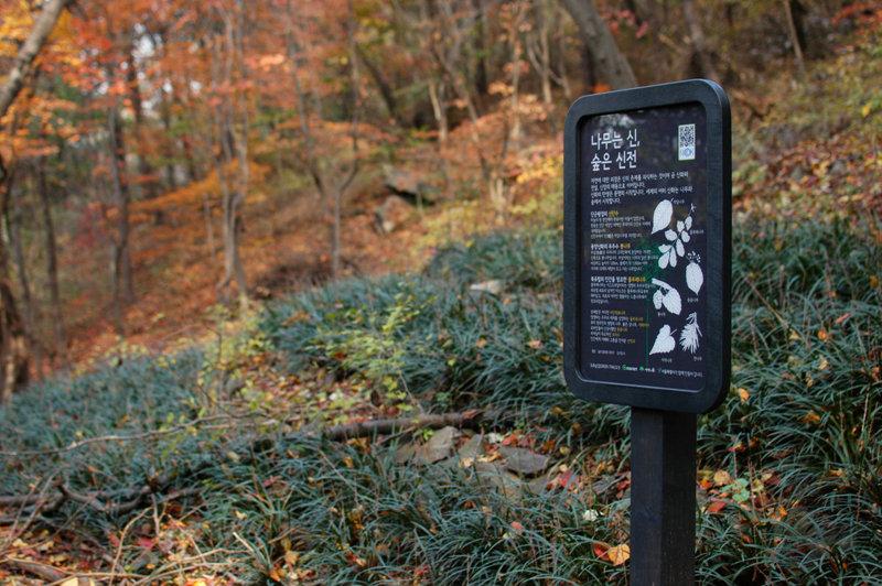 NS1001 나무는신숲은신전 450*600