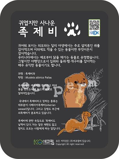족제비(한국의 포유류)