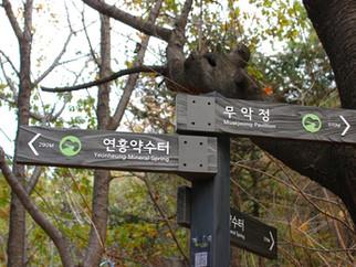 초록숲길 안산, 백련산