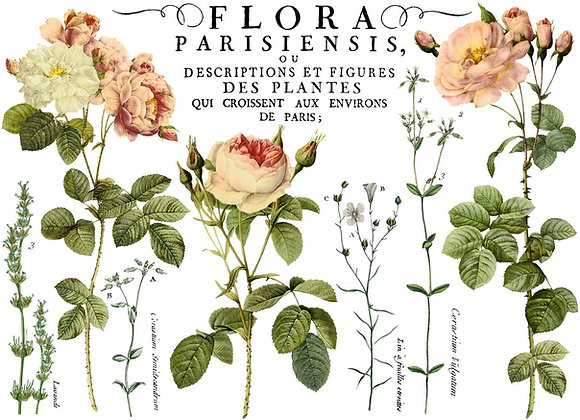 IOD Decor Transfer - Flora Parisienisis