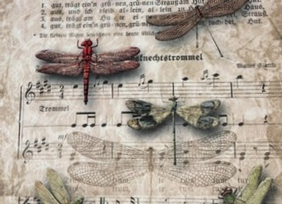 Dragon Flies and Music - Large