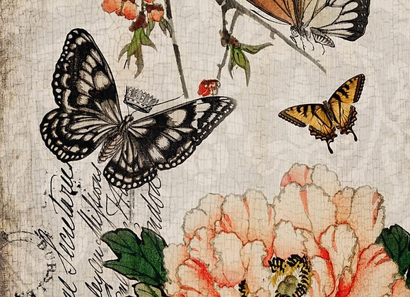 #50 Butterfly Floral
