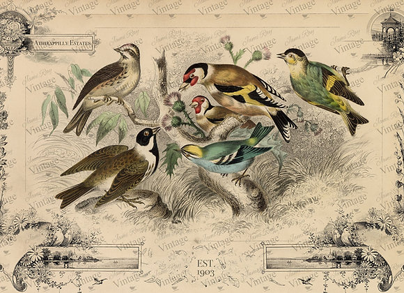 #2032 JRV Cottage Birds