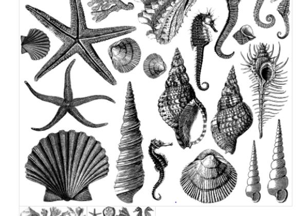 Decor Stamp - Seashore