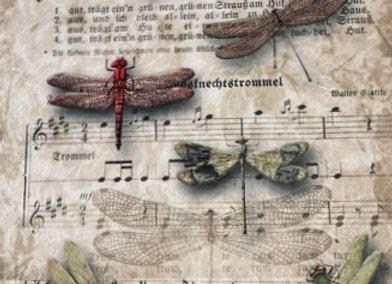 Dragon Flies and Music - Small