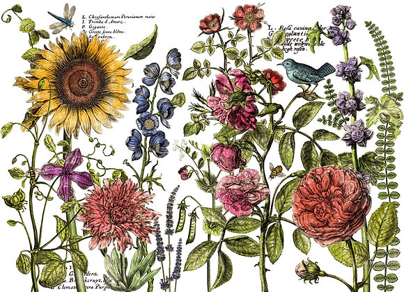 IOD Decor Transfer - Botanist's Journal