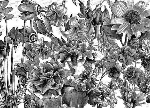 #2033 JRV Black and White Floral