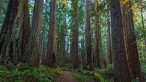 Prairie_Creek_Redwoods_State_Park.jpg
