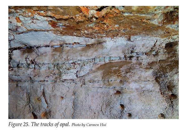 track of opal.jpg