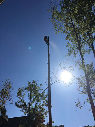 Tree Removal Service topping trimming pruning near Marvin