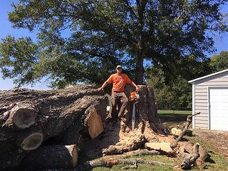Professional Arborist